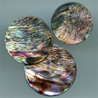 AA-1142-New Zealand Abalone, 3 Sizes