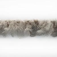 IR8129 Grey Tan Feathers on Tape
